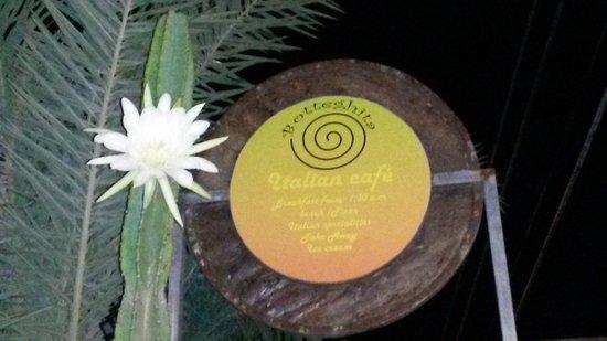 Botteghita : Insegna & cactus fiorito §