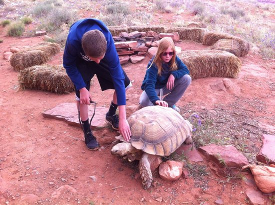 Base Camp : Kobae the Security Tortoise