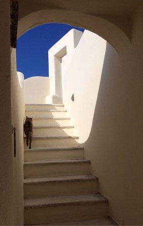 Canaves Oia Hotel: ホテル内で猫を発見!