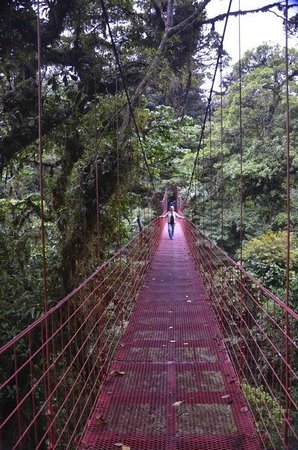 Monteverde Cloud Forest Biological Reserve: Suspended bridge was awesome!