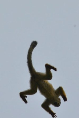 Playa Manuel Antonio: Lots to monkey around with at the Reserva!!!