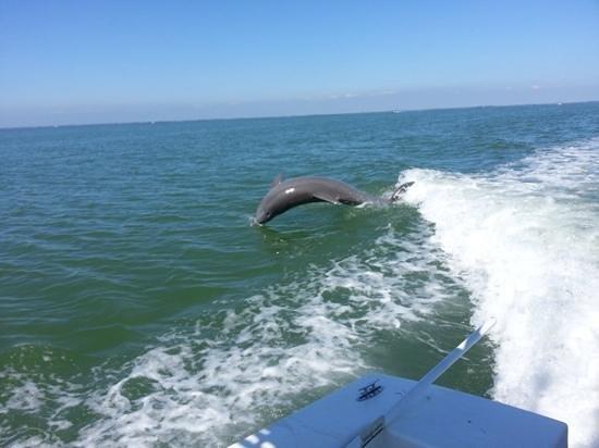 Captain Randys Fishy Business: dolphins galore