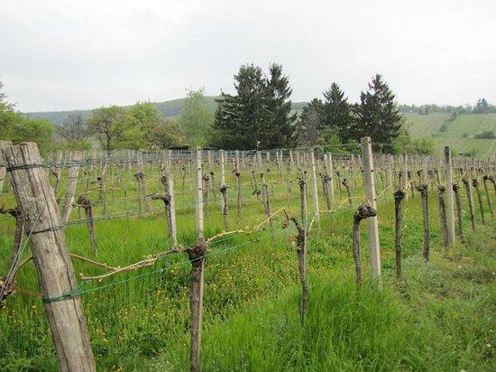 Landhaus Fuhrgasslhuber: The vineyards - such a fresh view