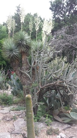 Zilker Botanical Garden: Cactus and Succulents