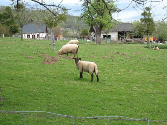 Les Cigognes: Neighbours are sheep!  Their job is to eat grass and look cute...  And probably grow wool.