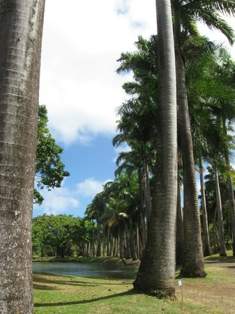 Habitation Clement: Many different varieties of palm trees