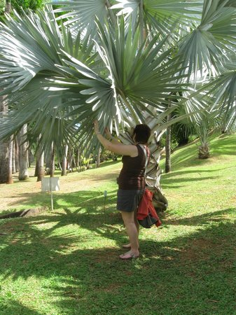 Habitation Clement: Checking out the palm leaves - be prepared to walk if you want - it's a beautiful place to explo