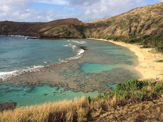 Hanauma Bay Snorkeling Tours Honolulu Hi