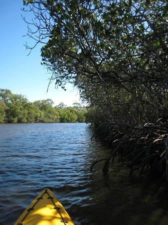 Boardwalk Boat Hire: Weyba Creek Kayak Tour