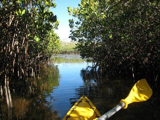 Boardwalk Boat Hire: Lake Weyba Kayak Tour