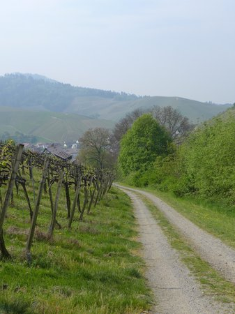 Hotel Restaurant Linde : On a walk through the nearby vineyards