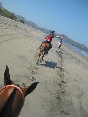 Flamingo Beach Resort & Spa: horseback riding on beach (not hotel beach)