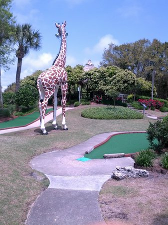 Coconut Creek Family Fun Park: fun