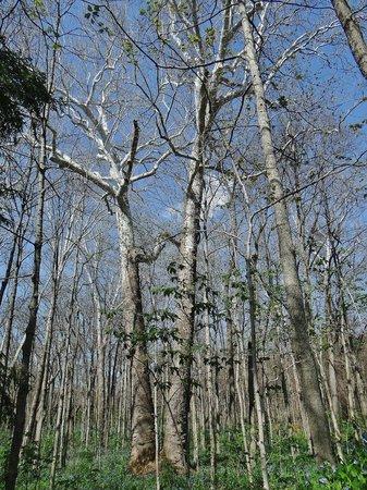 Aullwood Garden MetroPark: sycamore trees