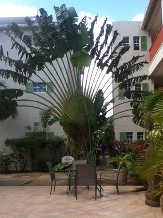 Bay Gardens Beach Resort: Fan Palm in courtyard