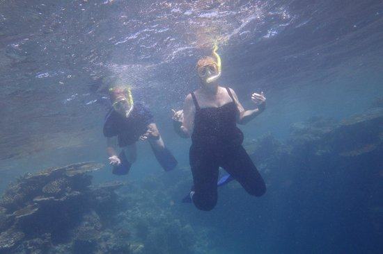 underwater picture of great barrier reef down under. Black Bedroom Furniture Sets. Home Design Ideas