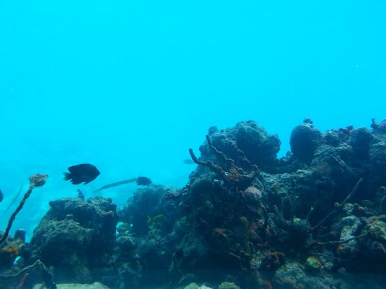Coral World Ocean Park : from the underwater view