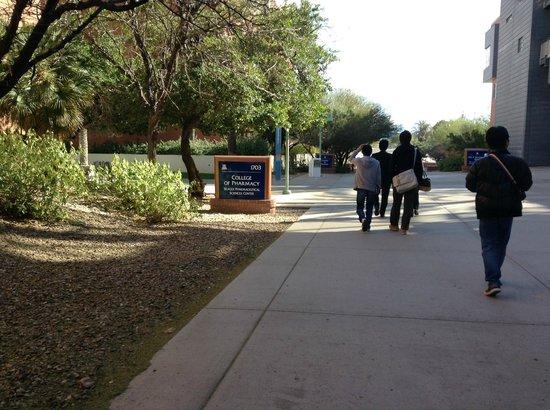 University of Arizona: 砂漠が近いですが、道路の両側は緑に覆われています。