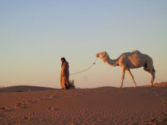 Merzouga Dunes: Le chamelier fait parti du paysage