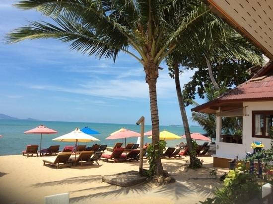 Hacienda Beach Resort : caratteristici ombrelloni...