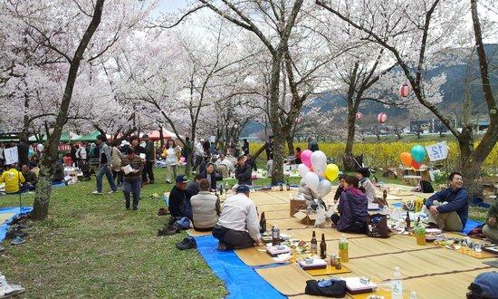 Hida Furukawa Matsuri Hall: Sakura Hanami between Hida and Takayama