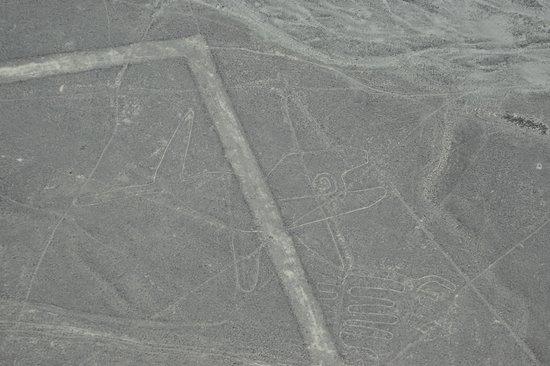 Lineas de Nazca: The whale