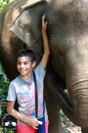 Elephant Freedom Project: A little boy's dream holiday