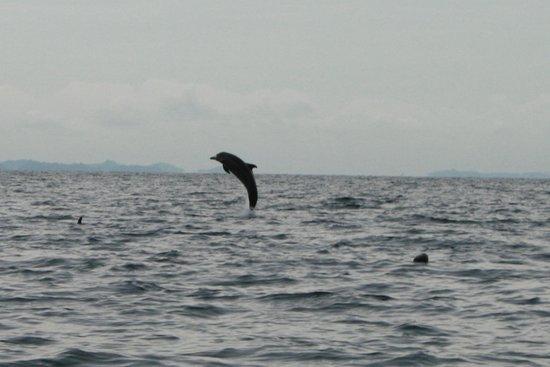 Golfo Dulce Lodge : Delfin im Golfo Dulce