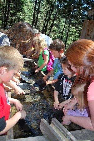 Yosemite Mountain Sugar Pine Railroad : Gold panning was a highlight of my son's visit