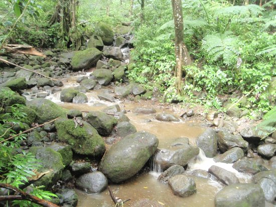 Manoa Falls : another stream
