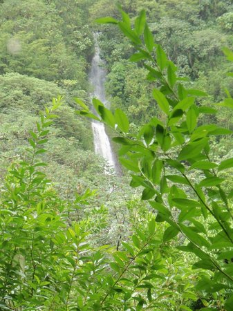 Manoa Falls : lower falls and upper falls