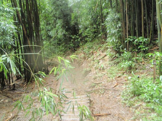 Manoa Falls: stream along hiking trail