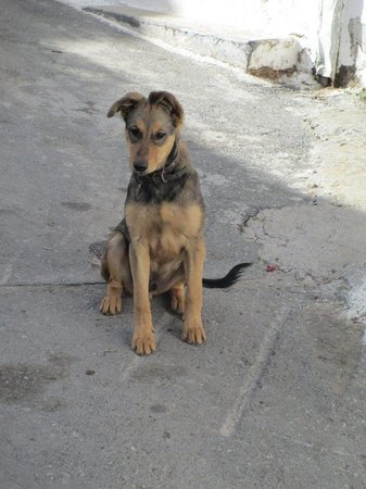 Safari Club Crete: A very cute dog in one of the villages