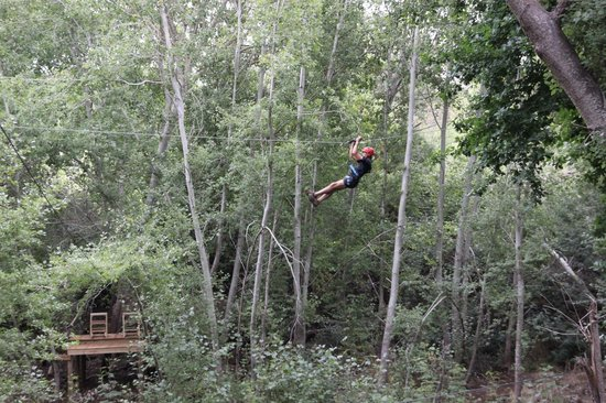 Hermanus Forest Adventures: Glide in the Forest
