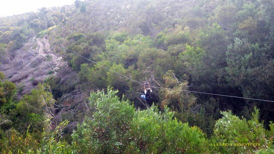 Hermanus Forest Adventures: up up and away
