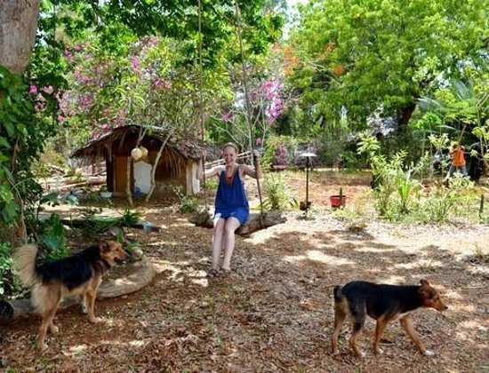 Distant Relatives Ecolodge & Backpackers: enjoying the wooden swing with the dogs!
