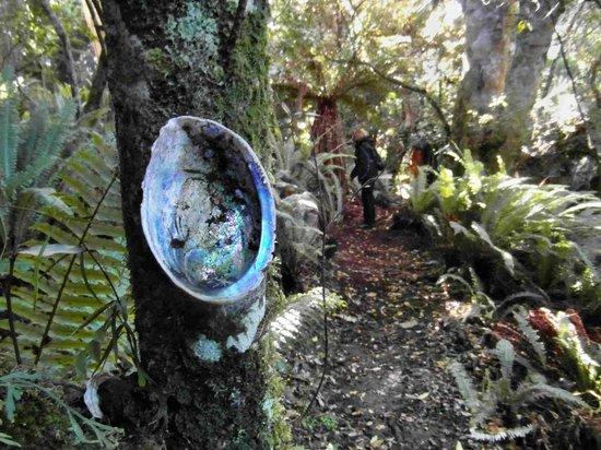 Catlins Mohua Park: Muscheln weisen den Weg durch den dichten Wald