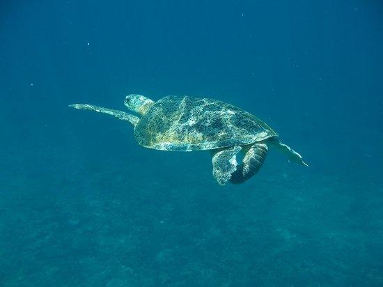 The Taaras Beach & Spa Resort : Nuotare tra le tartarughe marine