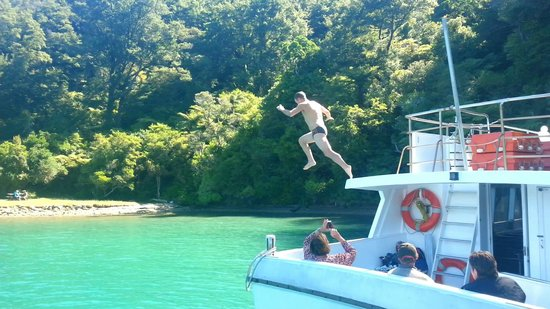 Pelorus Mail Boat: Swimming optional!