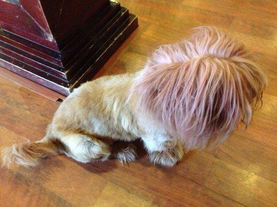 Chau Long Sapa Hotel: Pinky-hair dog. She is so fashioned!!!!