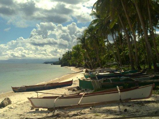 Anda White Beach Resort : Boats at Anda