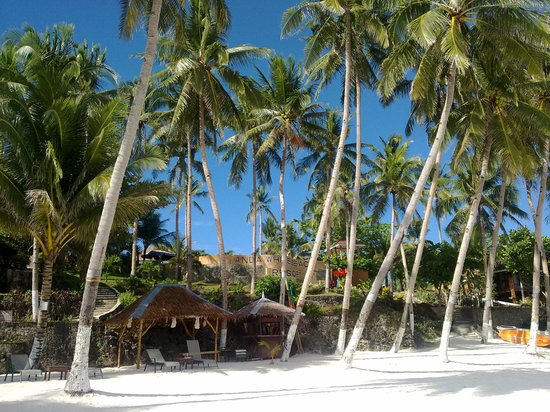 Anda White Beach Resort : Beachfront