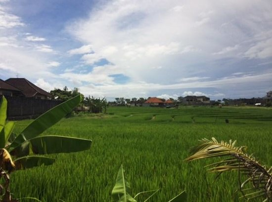 Bliss Sanctuary for Women: Surrounded by rice paddies