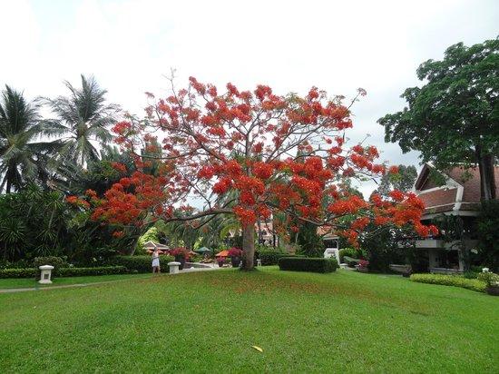 Santiburi Koh Samui: Wunerschöne Anlage