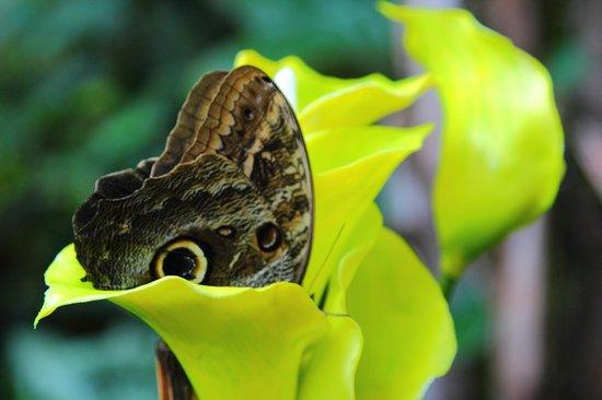 Schmetterlinghaus: Mariposa...
