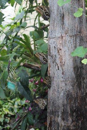 Schmetterlinghaus: Árbol natural...
