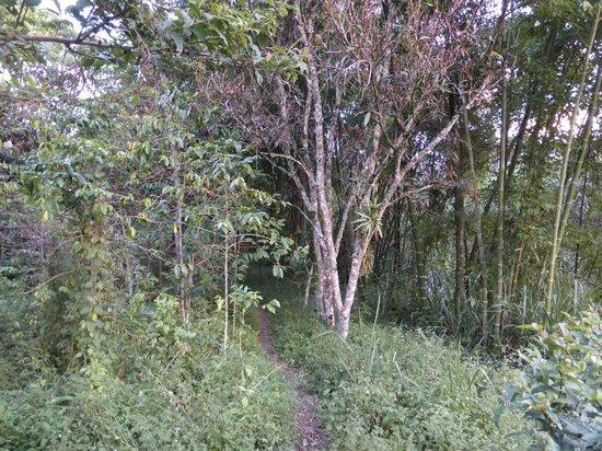 Rumi Wilco Ecolodge & Nature Reserve: Galleriewald entlang des Vilcabamba-Flusses