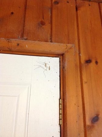 Forest View Guest House : More dust and daddy long legs at flat entrance!!