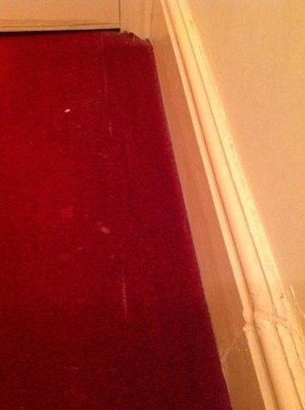 Forest View Guest House : Dirty patched up carpet!