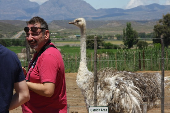 Safari Ostrich Show Farm: getting close to the ostriches #Safari Ostrich Farm